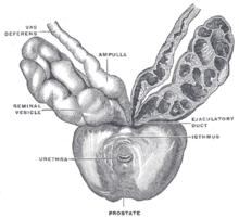 Magnetoterápia a prosztatitis kezelésében